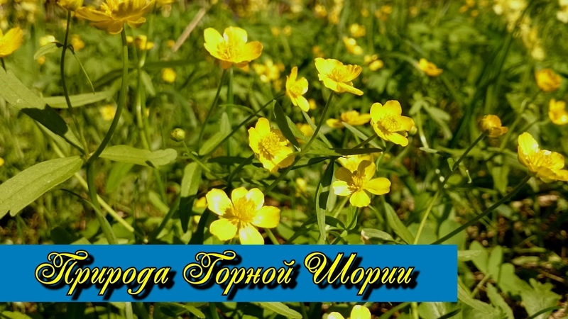 Природа Горной Шории
