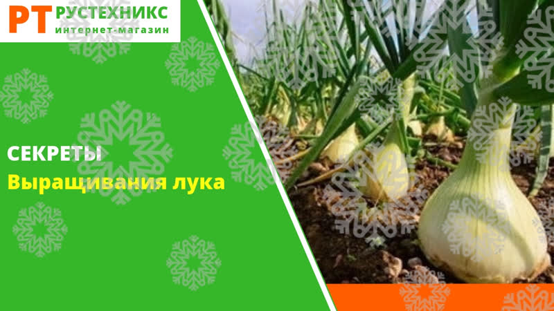 ТОП 10 секретов выращивания лука