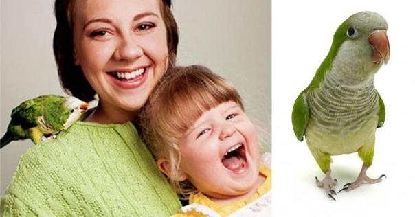 Случаи спасения человека животными. Попугай спас двухлетнюю девочкуМногим людям попугаи не нравятся из-за того, что они громко и раздражающе кричат, но иногда эти крики могут спасти человеку