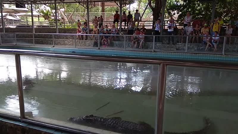 Шоу крокодилов... очень длинное