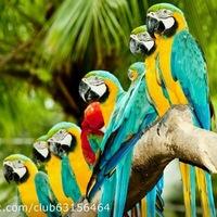 Всё о попугаях неразлучников - b8