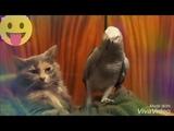 Попугай и котпопугай поёт коту