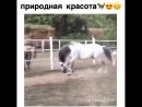 Лошади поистине прекрасны