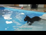 Baby Jaguars very first swim - Big Cats about the house