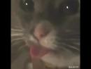 Упоротые коты