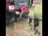 Собака пытается поймать воду из шланга