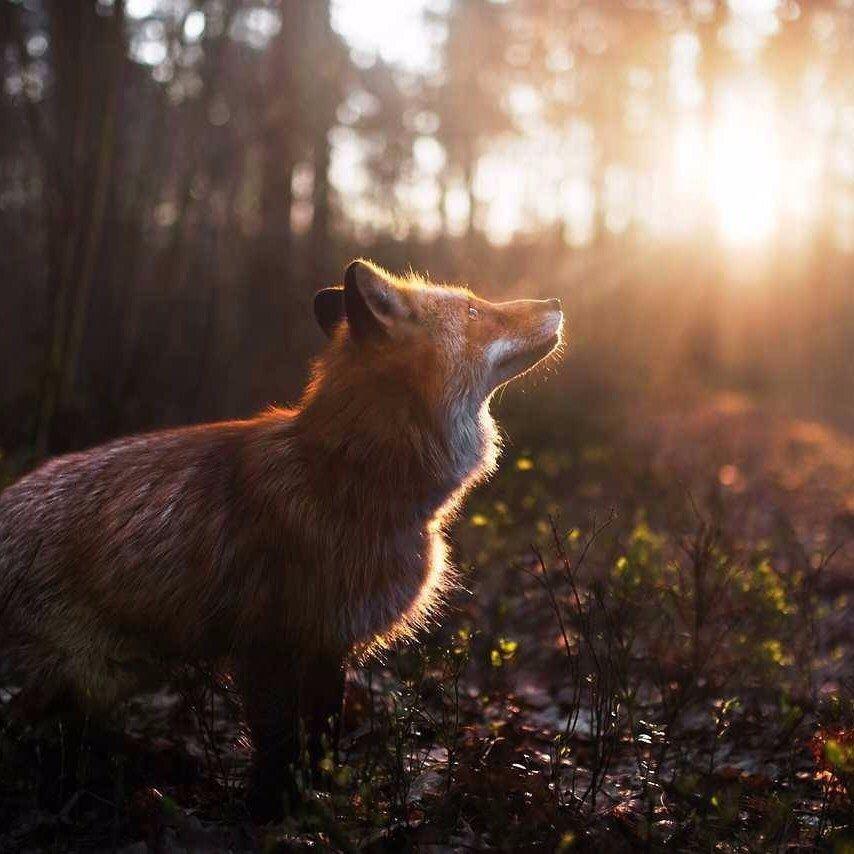 Маленький кусочек осеннего солнца