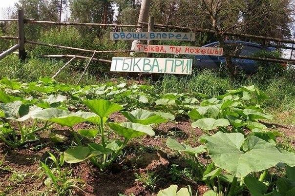 Садоводство Мшинская - Мега