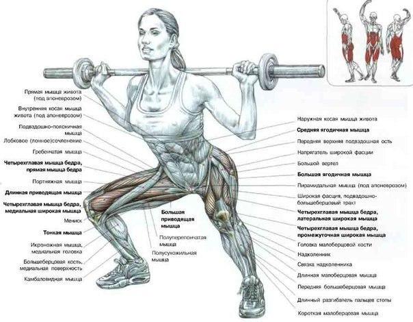 упражнения картинки для ног