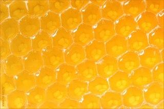 Предлагаем вам подборку рецептов народных средств, в состав которых входит мед.