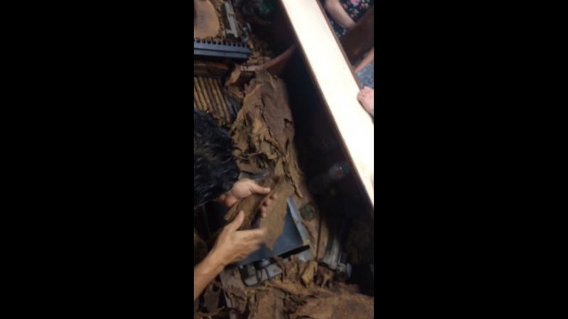 Производство сигар в республике Доминиканы