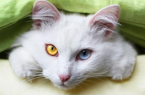 у кошки на носу появились черные точки
