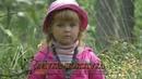 Муха-цокотуха. Трагическая комедия о гибридной мухе. Видео - Александр Травин
