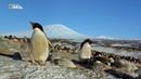 Nat Geo Wild Дикая Антарктика 720р