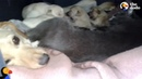 Dog And Cat Share Shelter To Keep Their Babies Warm Together | The Dodo
