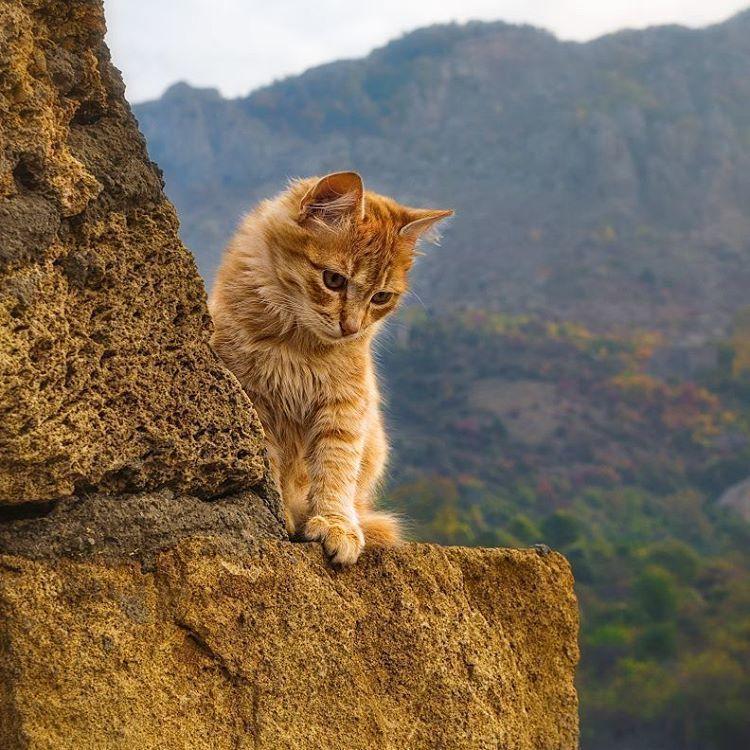 картинки с котами в горах татуировки стиле блэкворк