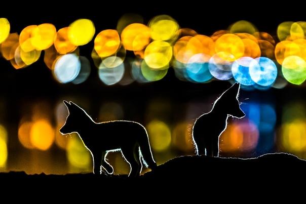 «Разноцветная ночь» Фото: Mohammad Murad