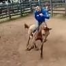 А конь не так то прост