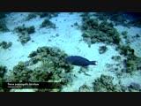 Подводный-Путешествие к коралловому рифу Красного моря