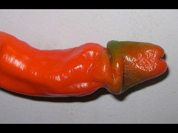 Penis Peppers, Because Why Not