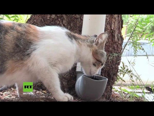 Happy Kittys in Syrien: Hunderte Menschen stellen Futter-Röhren für herrenlose Katzen auf