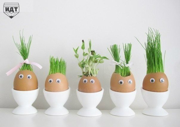 Огород в яичных скорлупках. Отличный эксперимент для ребёнка!