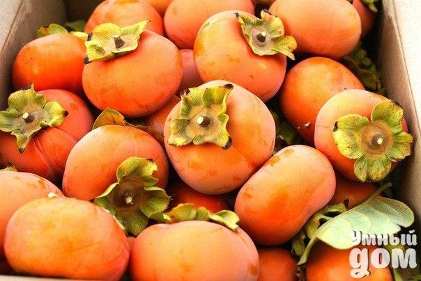 Хурма может заменить многие лекарства! Сушёные плоды хурмы применяются для лечения гипертонической болезни - она может заменить валокордин, если съедать по 2-3 плода ежедневно. Плоды хурмы помогают справится с проблемами желудочно-кишечного тракта. При диарее 6 спелых плодов нужно разрезать на части и залить 3 стаканами кипятка, накрыть крышкой и выдержать полчаса. Остудить и принимать по 1 стакану каждые 2-4 часа. Она служит профилактикой от онкологии, заболеваний лёгких и образования камней…