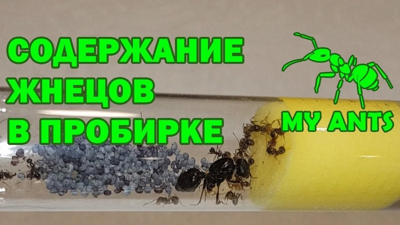 Инкубатор для муравьев