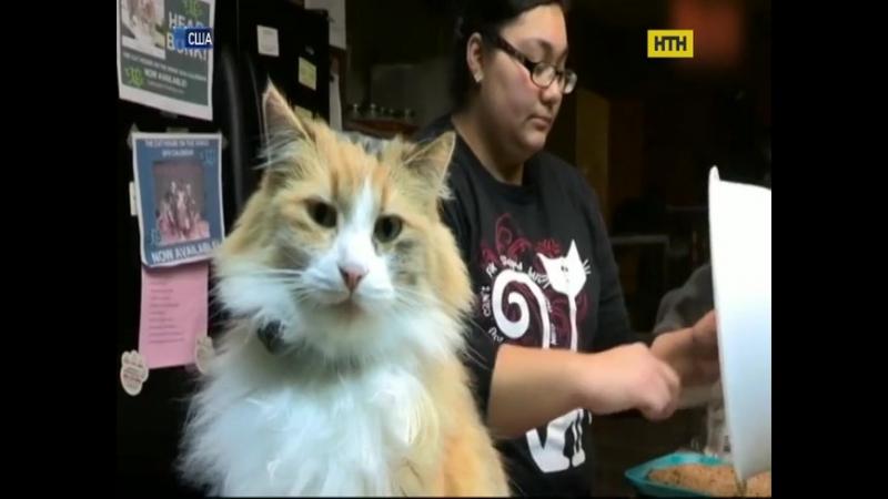 Американка з великим серцем прихистила вдома до тисячі котів!