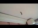 паук и муха 2