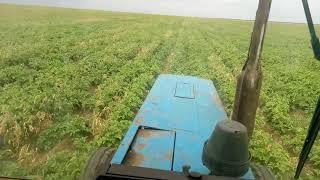 Протравка картофеля от сорняков опрыскивателем Авагро.