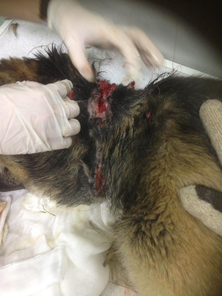 Прошу помощи у всех людей небезразличных к животным.