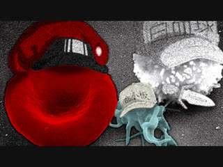 Cells at Work: Live Action!
