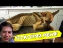 Волонтёры спасли от смерти брошенную собачку!
