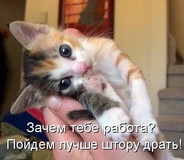 http://cs7063.vk.me/c7001/v7001967/13002/ShK0h956tNM.jpg