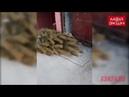 Слабаки благовещенцы выбросили новогоднюю елку