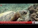 Marea roja mata a miles de animales marinos en Florida