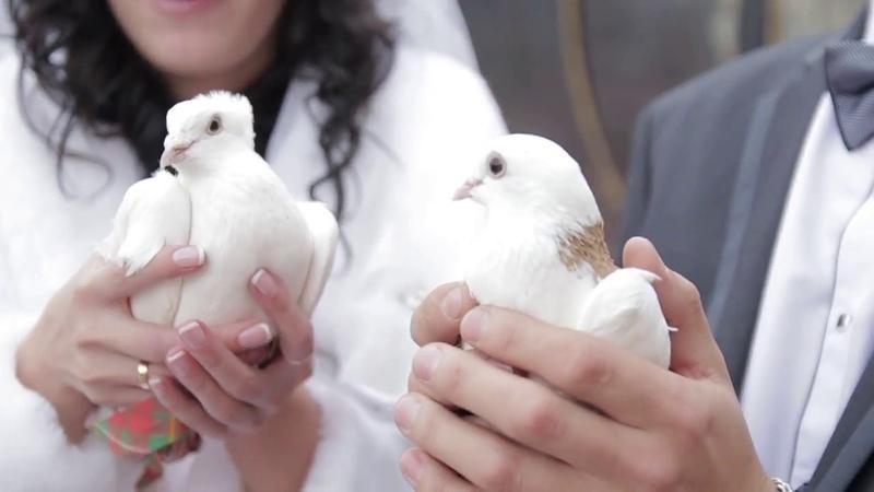 Любовь и голуби красивое видео свадебные голуби в небе