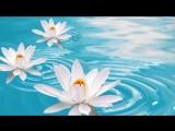 Белые лилии!!! Красивая песня!!