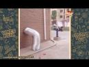 китайские приколы 2017 (online-video-