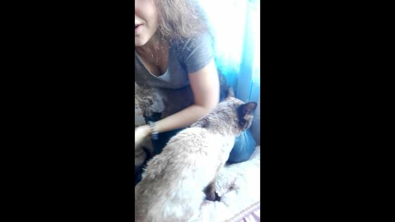 Таня в мире котов:))