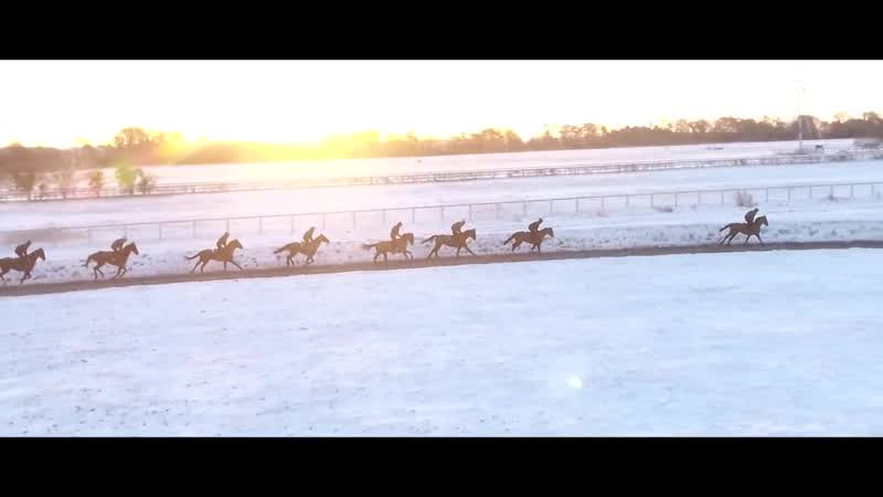 FL ● Зимние проездки на конюшне Гарри Виттингтона (скачки)