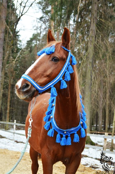 Амуниция на лошадей своими руками