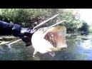 Подводная охота на Щуку Отчет 2018 год Смоленские реки