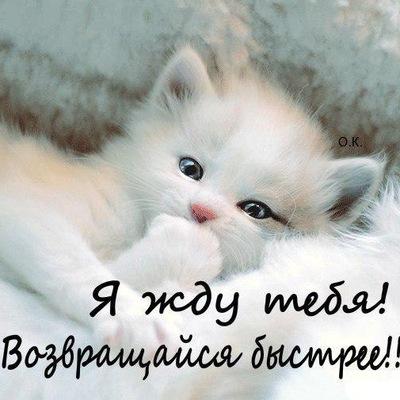 Елена Хабек, 31 мая 1991, Ивангород, id214316559