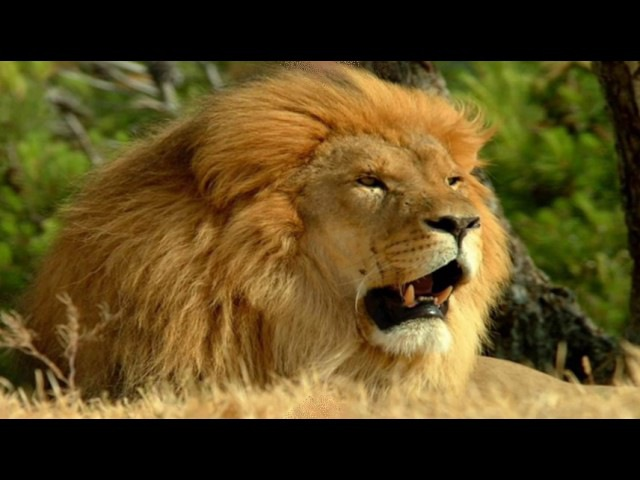 ТОП 10. Самые опасные животные в мире