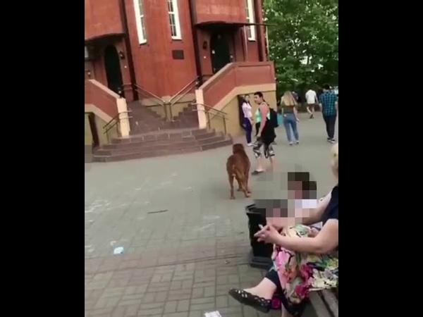 Женщина гуляет с огромной собакой на ЮМР