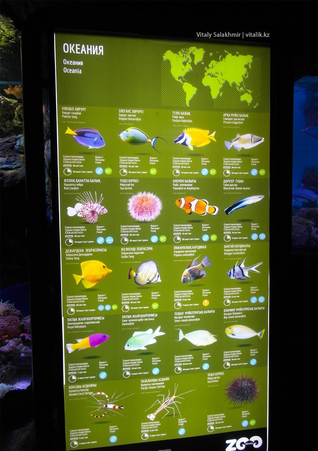 Табличка на аквариуме, Зоопарк Алматы