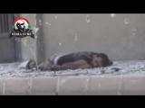 Война в Сирии.Архив.Снайпер САА добивает раненого боевика