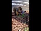 Сникерс походу с лесным орехом 😃